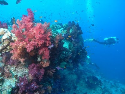 Dive site in Fiji, perfect for scuba divers.