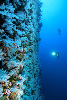 Fiji holiday packages include a tour to the White Wall dive site in Taveuni